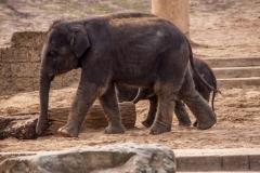 Elefanten Kinder