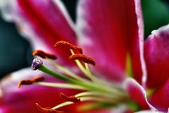 Blumenpollen